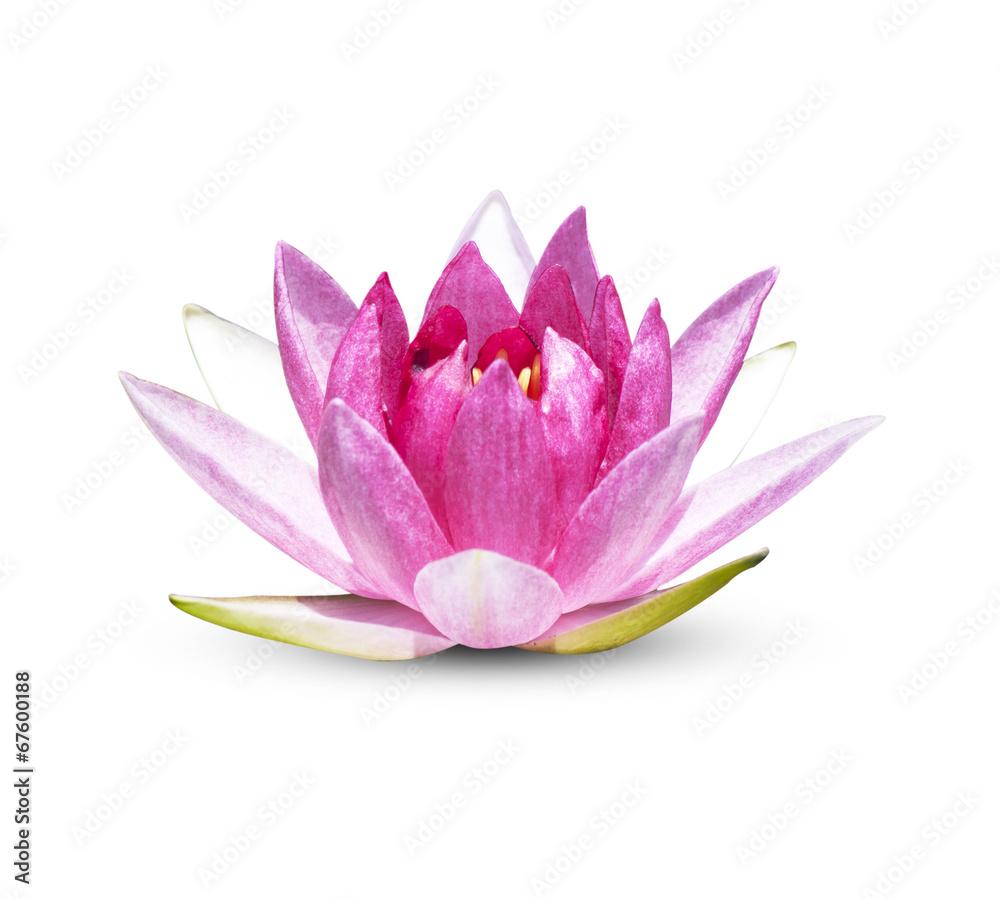 cr dence de cuisine en verre imprim lotus flower nikkel. Black Bedroom Furniture Sets. Home Design Ideas