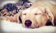 Puppy And Kittens Sleeping