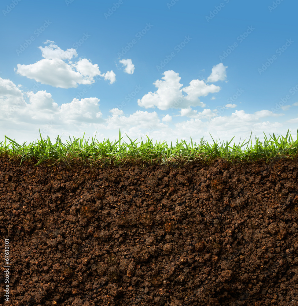 Fototapety, obrazy: grass and soil