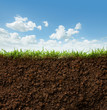canvas print picture - grass and soil