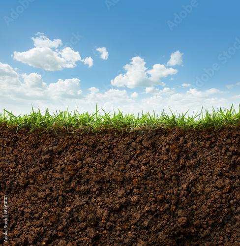 Fotografía grass and soil
