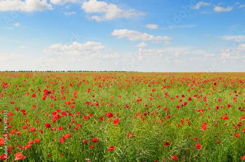 poppies on green field