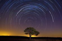 Star Trail With Lone Tree Brow...