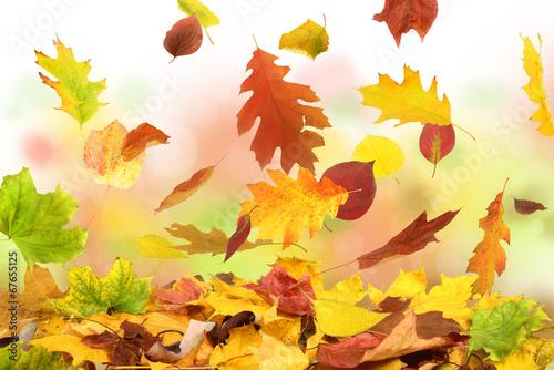 Herbstblätterfall
