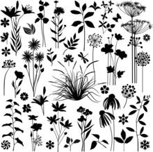 Big Botany Set