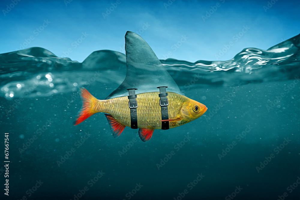 Fototapety, obrazy: Small Fish with Shark Fin