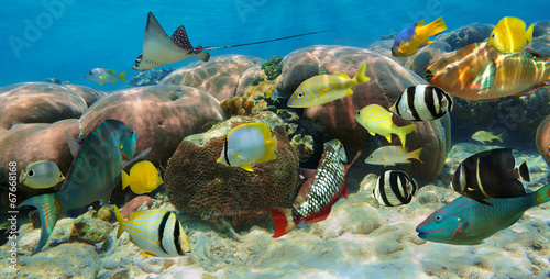 Underwater panorama in a coral reef with fish #67668168