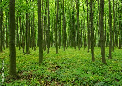 Trees #67668923