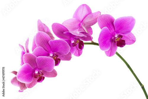 Obraz na plátne Orchid flowers isolated on white background