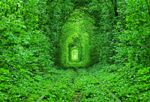 Abandoned Railway Tracks In Forest, Green Tunnel