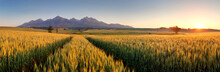 Sunset Over Wheat Field With P...