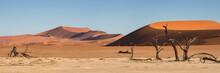 Panorama Of The Sossusvlei