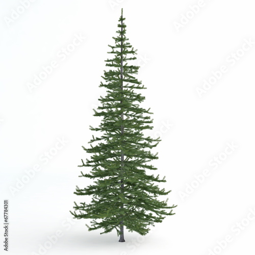 Photo Fir tree isolated