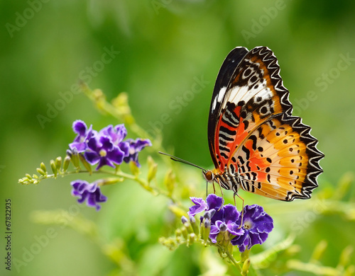 Poster Vlinder Butterfly on a violet flower