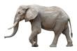 canvas print picture - Elefant vor weißem Hintergrund
