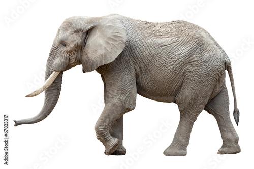Photo sur Aluminium Elephant Elefant vor weißem Hintergrund