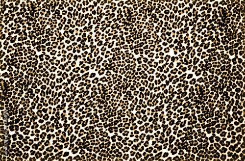Poster Leopard Leopard Print