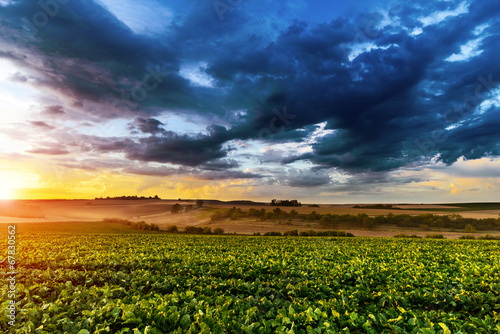 Poster Texas Sunset in fields in summer