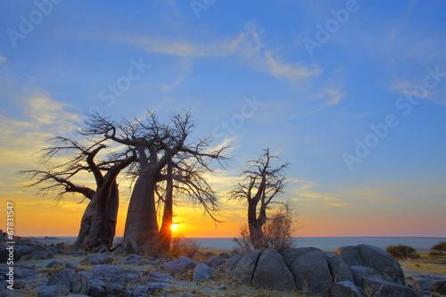Poster Baobab Baobab's at sunrise on Kubu Island