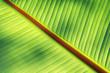 canvas print picture - Blatt der Banenenpflanze