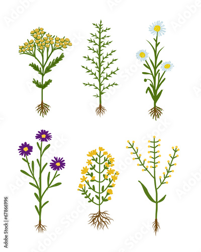 Fototapeta Herbarium flowers with roots, sketch for your design obraz na płótnie
