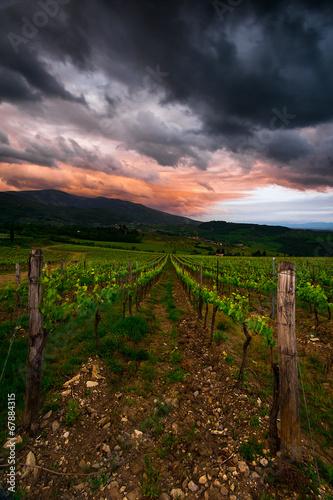 Papiers peints Vignoble vigneto
