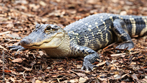 Printed kitchen splashbacks Crocodile See U later