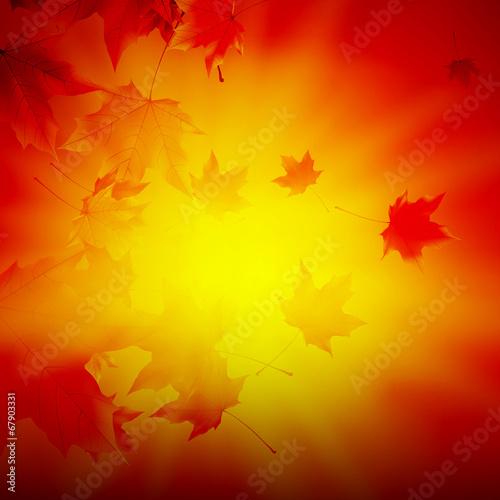 Fototapeta Delicate autumn sun with glare on gold sky. obraz na płótnie
