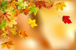 Maple autumn leaves on natural background, vector illustration.