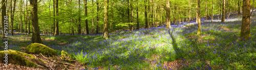 Magiczny las i dzikie kwiaty dzwonka