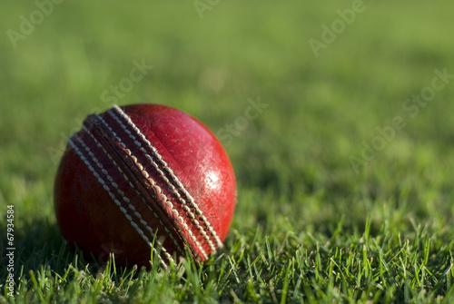 Fotografia Red cricket ball on green grass