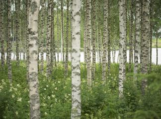 Panel Szklany Birkenwald & See