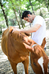 Fototapetahandsome young veterinary ausculting horse with stethoscope
