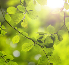 Green Forest Tree Leaves