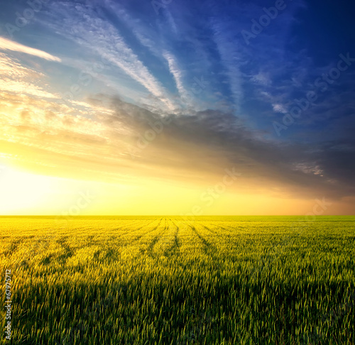 Photo Stands Melon Field during sunset. Agricultural landscape