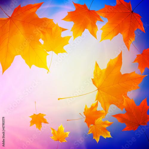 Fototapeta Beautiful autumn Leaves. obraz na płótnie