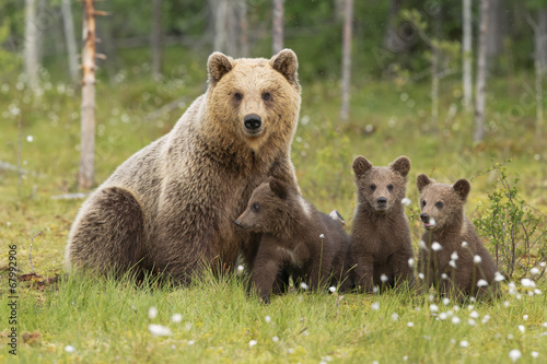 Fotografie, Obraz  Famiglia orsi