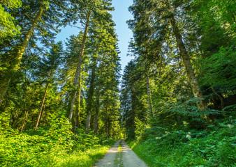 Forêt de la Joux FRANCE