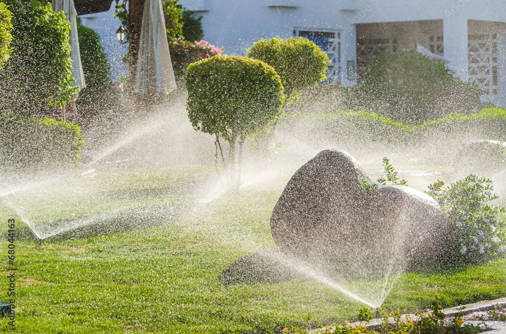 Fototapety, obrazy: Automatic Sprinkle plants in the garden