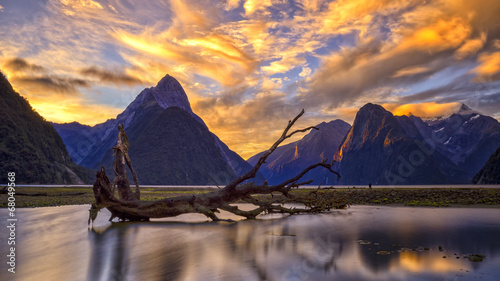 Wall Murals New Zealand Milford Sound