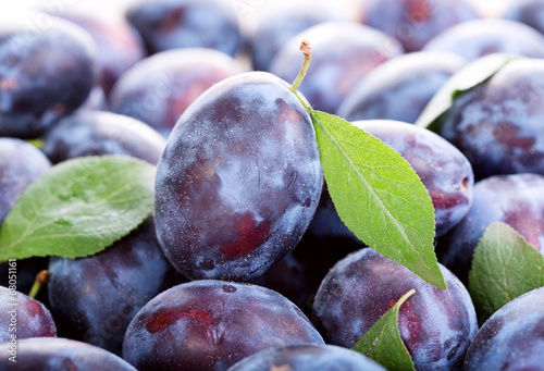 Carta da parati blue plums