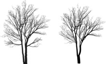 Small Two Bare Isolated Tree S...