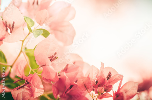 Photo sur Aluminium Azalea Paper flowers or Bougainvillea vintage