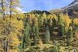 Alp woods