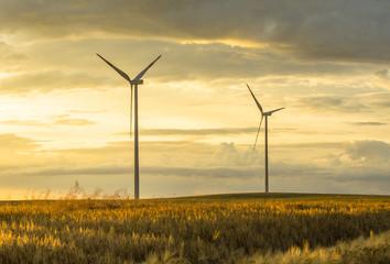 fototapeta wiatraki na polach w Niemczech