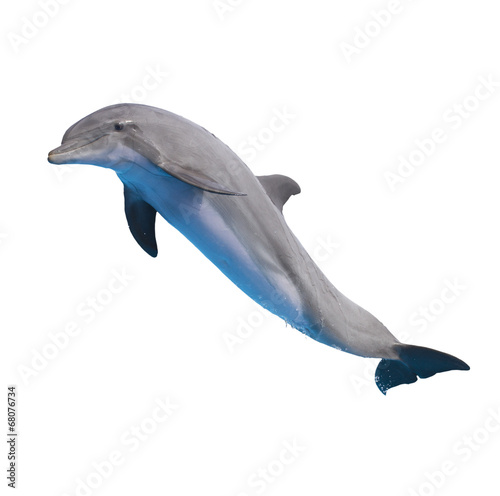Photo jumping dolphin on white