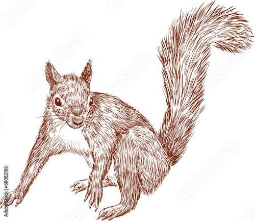 lesna-wiewiorka