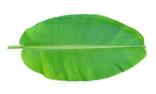 Banana Leaf Isolated On White ...