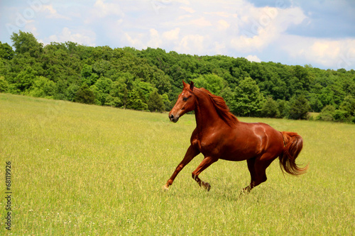In de dag Paardrijden Sorrel Horse Running in Summer Pastures