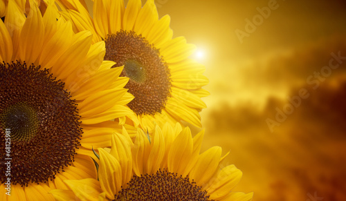 tuscany-sunflowers